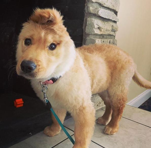 Unicorn Puppy
