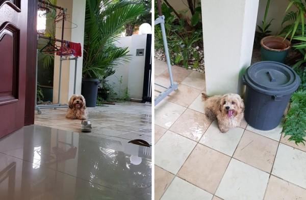 Siggy the Stray Dog
