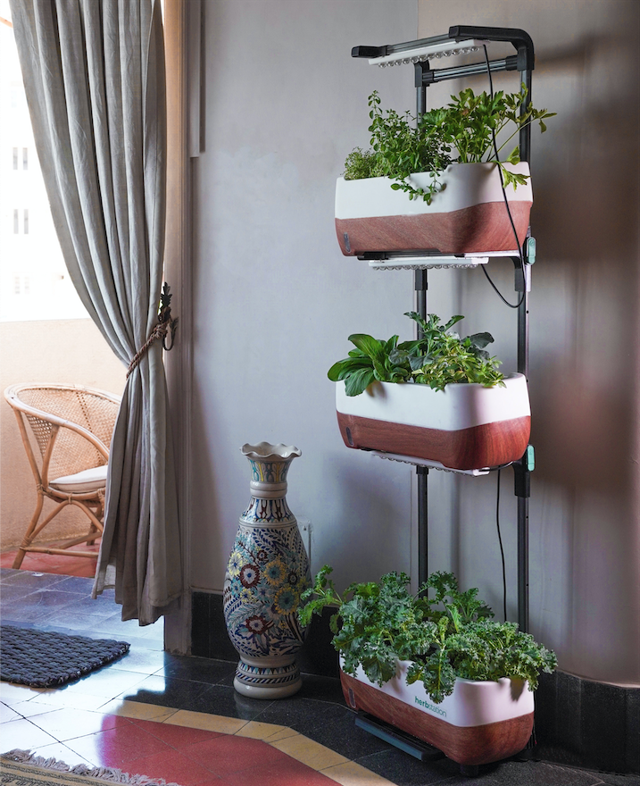A Brief Guide to Building Vertical Gardens