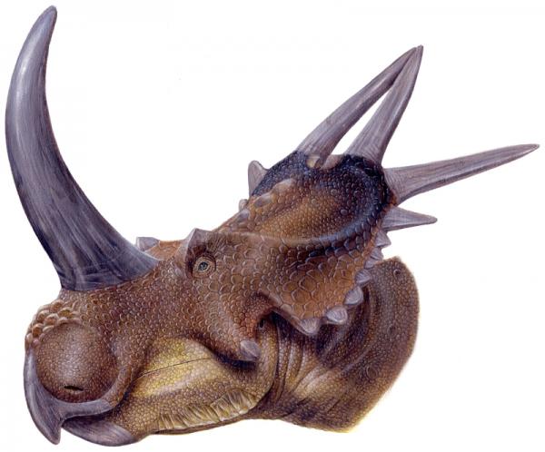 Stellsaurus