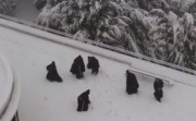 monks in snowball fight