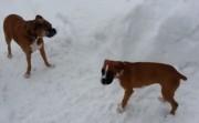 old dog tricks little puppy
