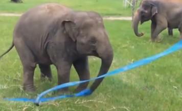 elephant and a ribbon