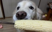 dond and his corn treat