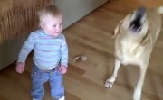 dog and a child