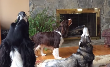 dogs have conversation