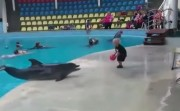 playing ball with dolphin