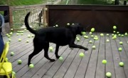 dog and his favorite balls