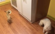 dog that doesn't want to eat alonw