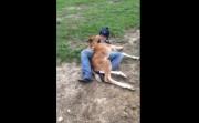 cuddling a baby horse