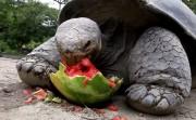 animals eating fruit