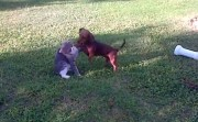 dog and cat friendly fight
