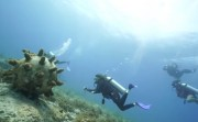 The Underwater Museum of Mexico