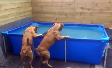 bulldogs Teamwork
