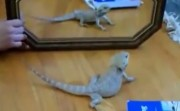 animals versus mirror