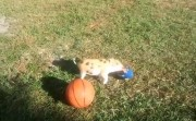 piglet playing balls