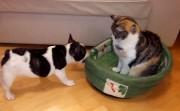 dog versus cat