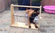 entertainment for dog
