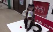 monkey and its juice