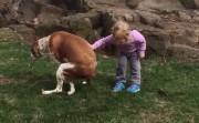 encouraging a dog