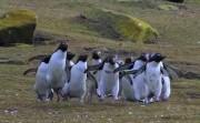 Penguin Bloopers