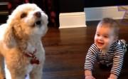 babies and dog talking