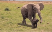 elephant mother and her baby