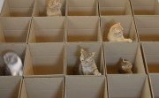 cats in the box