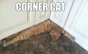 Corner cat. What an acute kitty.