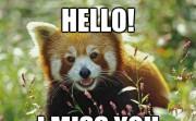 HELLO! I MISS YOU