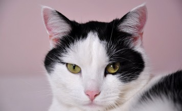 Foreign Office cat accused of being EU spy