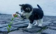 Cute Kitties of All Time