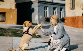 CBD Oil For Dogs And The Toxicity Of High THC Products