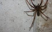 spider-170161_1280.jpg